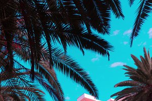 Palms and hotel. Life in colour.