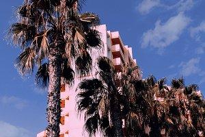 Palms background minimal.