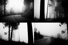 Road in the foggy woods (6bw photos)