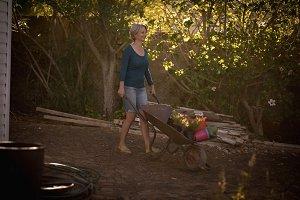 Woman pushing wheelbarrow with firewood
