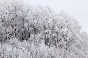 Photographed winter forest