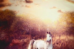 Gray horse in autumn Nature