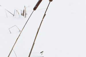 Two arrows reeds on the background.