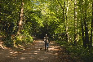 Rear view of man walking with dog in forest