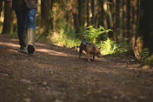 Man walking with his pet dog in forest