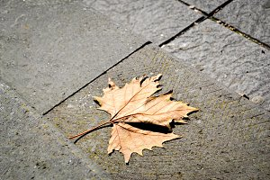 autumn leaf fall