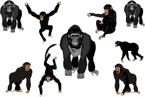 Vector Monkeys set.