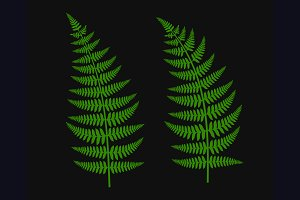 Green Fern Leaf Set