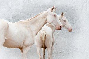 porcelain horses