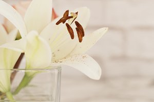 White lily flower in a glass vase