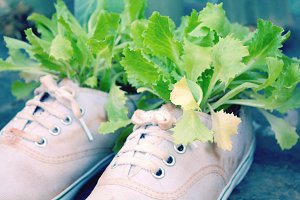 Plants in shoes