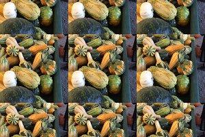 Pumpkins Colors Holiday Decor