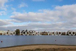Wild sea gulls flying above the autumn pond