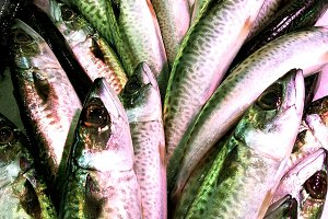 Fresh mackerel at market