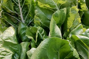 Green chard on the market