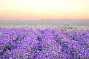 Lavender Field Romantic Set