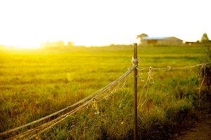 Closeup of sunset field