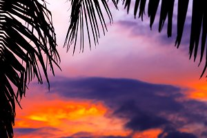 Asian tropic exotic sunset near palms
