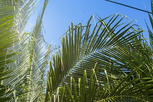 Palm leaves and sky
