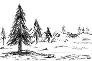 Hand drawn pine tree in winter