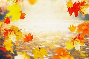 Autumn background , falling leaves