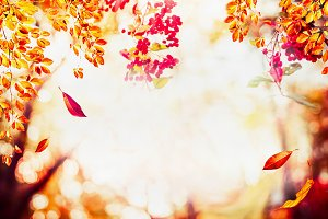 Autumn nature with falling leaves