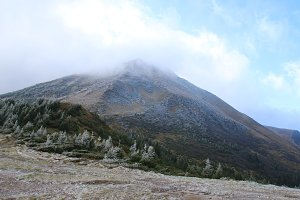 Mount Petros. Carpathians.. A part of the slope is covered with a bush with frost.
