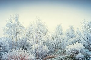 Amazing frozen trees, winter nature