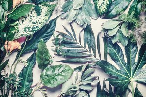 Tropical leaves layout
