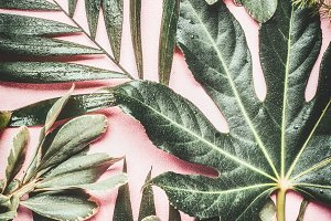 Green tropical leaves on pink
