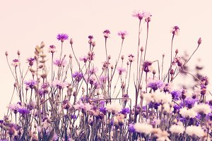 Retro cornflowers