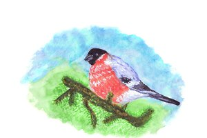 Bullfinch Bird On Pine Tree Branch