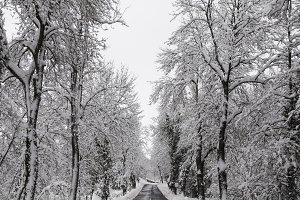 Rural road in winter snow