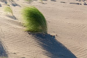 green bush in the desert