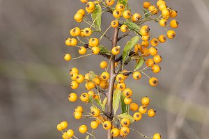 plant with fruits