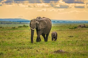 Mother elephant with a baby