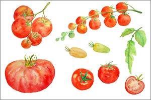 Watercolor Clipart - Tomato