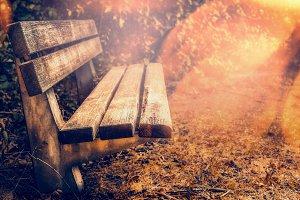 Bench in park or garden