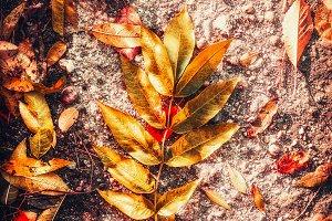 Beautiful color of autumn