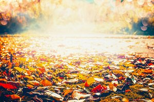 Fallen foliage , sunny autumn day