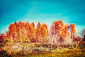 Amazing autumn color trees