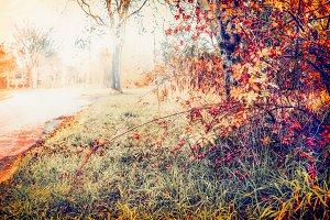 Country autumn landscape
