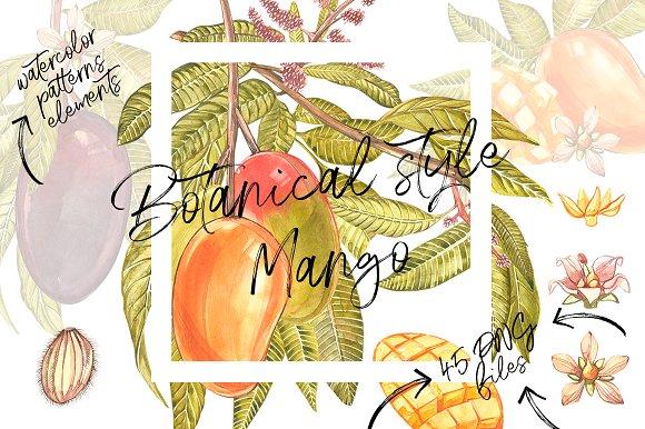 Mango In Botanical Style