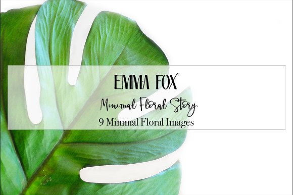 Minimal Floral Story Stock Photo
