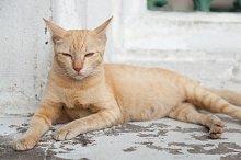 cat lying.
