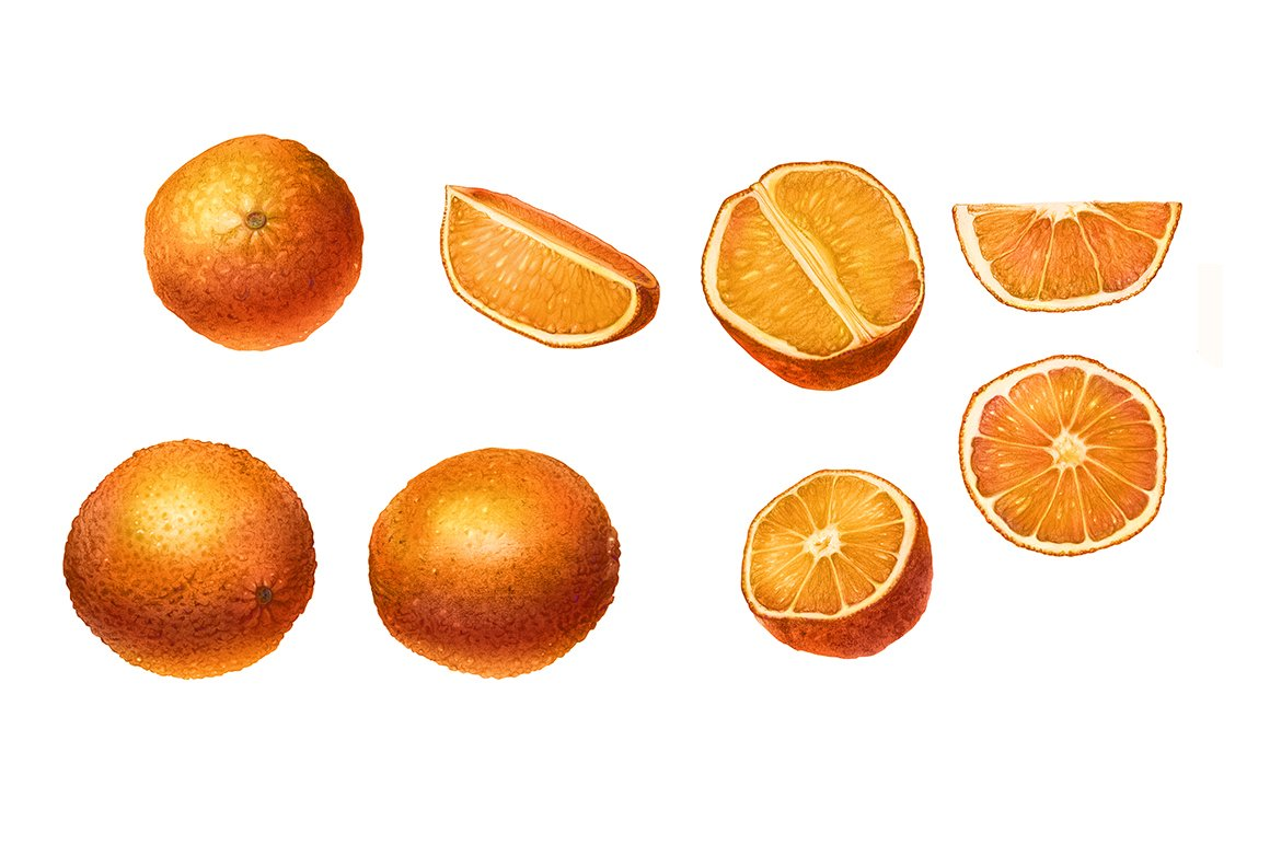Oranges pencil drawing isolated illustrations creative market