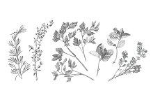 Garden Herbs Drawing Set