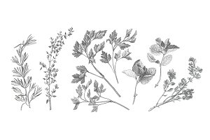 Garden Herbs Drawing Set