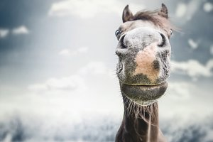 Funny horse face at overcast nature