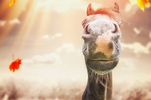 Funny horse face at autumn day